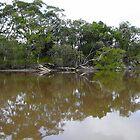 Fishing For Mudcrabs, Corindi River, NSW by aussiebushstick
