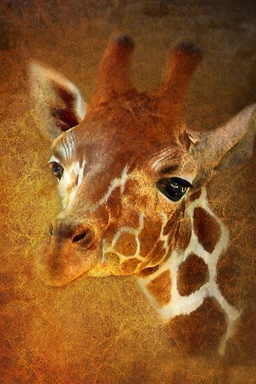 African Eyes by Trudi's Images