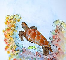 Hervey Bay Turtle by robert murray