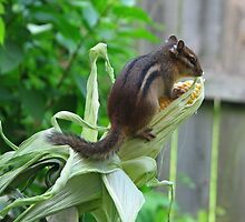 The Chipmunk on a Corn Cob by AlexKujawa