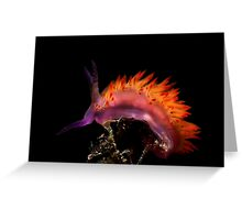 Flaming Tongue Greeting Card