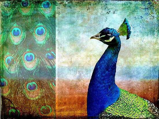 Pretty As A Peacock by Vanessa Barklay