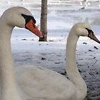 Mr & Mrs Swans by Poete100