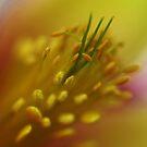 Inner Beauty by Gemma June