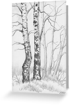 BIRCH TREE 01 by RainbowArt