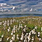 Bog Cotton by latitude54photo