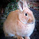 Bunny Wabbit by AngieBanta
