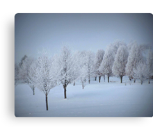 One More Fosted Tree Scene Canvas Print
