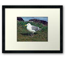 Seagull (4) Framed Print