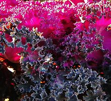 Ornamental Kale by Elizabeth Tilghman