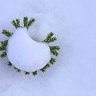 Tiny Tree - Big Snow by John Butler