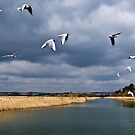 Radipole Nature Reserve ~ Weymouth by Susie Peek