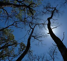 Reaching Skyward by Barb Leopold