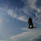 Soaring into the Sky by Thomas Young