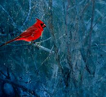 Northern Cardinal by Thomas Young
