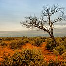 Kinchega Tree #1 by Heath Carney