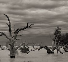 Menindee Trees by Heath Carney