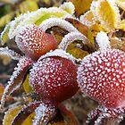 frosty rosehips by tego53
