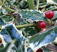 holly leaves by tego53