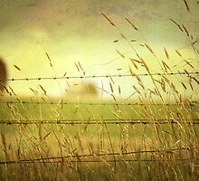 ~ A different View ~ by Lynda Heins
