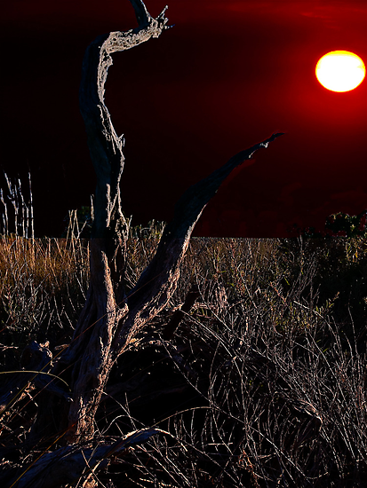 Red Sun by Andrew (ark photograhy art)