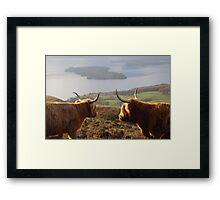 Enjoying the View - Highland Cattle Framed Print