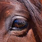 I see You by Michelle  Wrighton