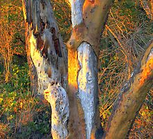 Warm Touch of Sunlight on Bark by Randall Thomas Stone