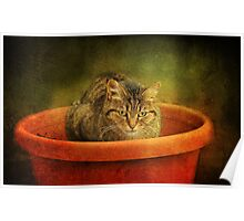 We're growing cats now! Poster
