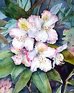 Rhododendrons by Ann Mortimer