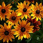 Orange Daisies by RedHillDigital