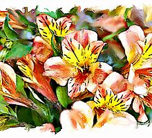 Peruvian Lily watercolour by PhotosByHealy