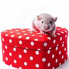 Cute rat on a heart box by PhotographerAri