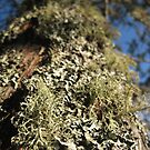 Moss Macro by Christopher Clark