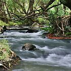 River Torrens, Gorge Rd South Australia by burrster
