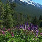 bountiful wild flowers by vernonite