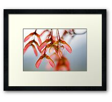 Maple Seeds Framed Print