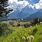 Mt. Rainier Anemones in the Sun by Emilie Trammell