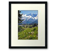 Mt. Rainier Anemones in the Sun Framed Print