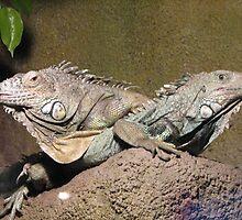 two little lizard sitting on a tree... by daantjedubbledutch