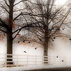 And Still the Birds Came by Mary Ann Reilly