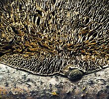 Dark side of the Moon - Turkeytail Fungus by Susana Weber