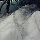 Winter evening shadows by Bluesrose