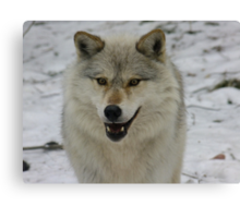 Happy and Alert Wolf Canvas Print