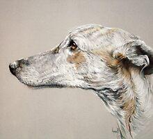 Greyhound by Redbarron