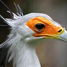 Secretary Bird by Tony Bates