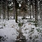Forest in Winter - Near Culross by Tristan Hopkins