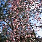 Cherry Blossom by Renfield286