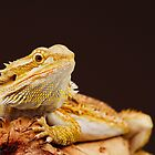 Central Bearded Dragon (Pogona vitticeps) by Shannon Plummer