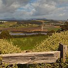 View from Braddon&#x27;s Lookout by Kylie  Sheahen